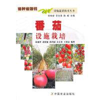 番茄设施栽培