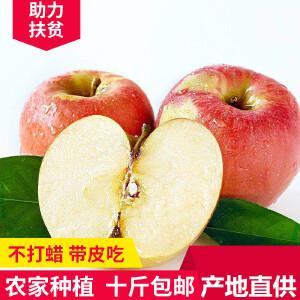 【陕西乾县馆】爱心助农苹果10斤装(75-85mm)红富士  包邮 当季新鲜水果