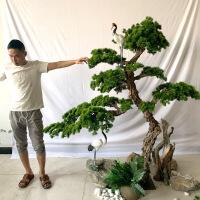 【家装节 夏季狂欢】迎客松假树仿真松树松盆景罗汉松装饰景观摆件造景