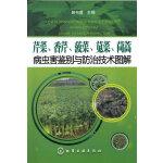 芹菜、香芹、菠菜、苋菜、茼蒿病虫害鉴别与防治技术图解