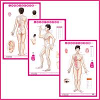 人体经络穴位挂图 (正、侧、背)女性 3张/套 中医针灸穴位标准挂图 男女美容养生保健中医挂图 赠图解手册