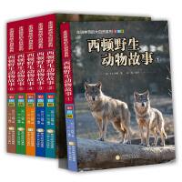 西顿野生动物故事集全6册 走进神奇的的大自然系列 大自然儿童文学西顿动物记 9-12岁儿童科普绘本小说精选彩图版 三四