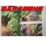 【二手旧书9成新】绿手指园艺:小花园种植(英国皇家园艺学会)