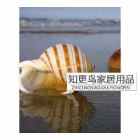 大贝壳 大海螺琴螺鱼缸水族箱装饰品卷贝鱼繁殖壳多肉花盆小摆件 琴螺 长11-12厘米