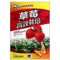 草莓高效栽培