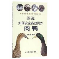 图说如何安全高效饲养肉鸭