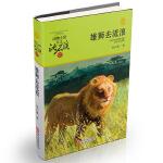 动物小说大王沈石溪・品藏书系:雄狮去流浪(升级版)