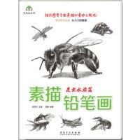 素描铅笔画・昆虫水族篇