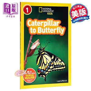 【中商原版】英文原版 Caterpillar to Butterfly 国家地理 从毛毛虫到蝴蝶