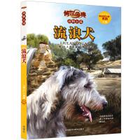 传世今典.动物小说5:流浪犬