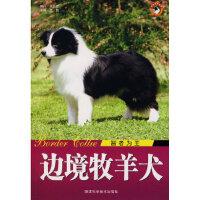 【新书店正版】边境牧羊犬智者为王王晓陕西科学技术出版社9787536943575
