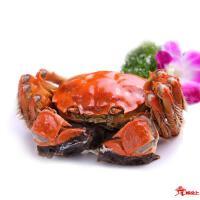 阳澄湖大闸蟹母蟹3.5两(实物)