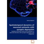 Spatiotemporal dynamics of neuronal networks with synaptic