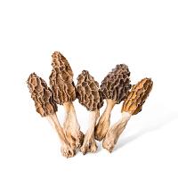 【辉南馆】野生正宗羊肚菌干货东北纯天然土特产有机羊肚菌菇礼盒装75g