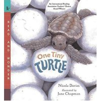 One Tiny Turtle: Read and Wonder [ISBN: 978-0763623111]
