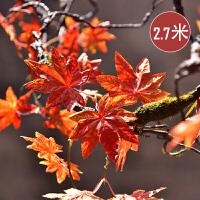 仿真红枫叶藤条管道吊顶装饰缠绕藤蔓塑料花叶藤条工程装饰树叶Q 一包加拿大美枫