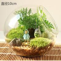 透明玻璃吊瓶 创意多肉微景观玻璃瓶 微观DIY盆栽生态瓶子