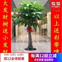 室�然�卉 盆景植物 �l��渑柙� 客�d��意花草 大型�G植 �艋�空�� 60厘米