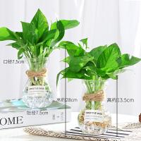 家居日用水培植物花瓶创意简约玻璃小清新透明水培绿萝插花风信子绿箩花瓶 玻璃瓶两个(送绿萝 贴纸 麻绳) 中等