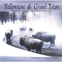 【预订】Yellowstone & Grand Teton Wildlife