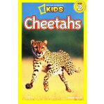 National Geographic Readers, Level 2: Cheetahs 美国《国家地理》杂志-儿童科普分级阅读,第2级:猎豹 ISBN 9781426308550