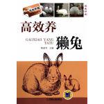 高效养獭兔(高效养殖致富直通车)