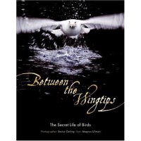 Between the Wingtips: The Secret Life of Birds [ISBN: 978-0