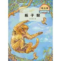 沈石溪激情动物小说板子猴