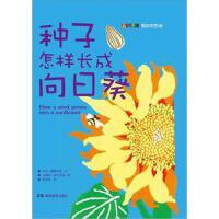 种子怎样长成向日葵
