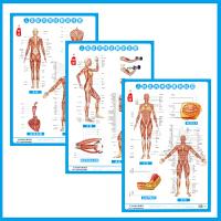 【高清挂图】正版 人体肌肉神经系统解剖挂图正反侧面一套3张 中医学家用挂图中医美容艾灸针灸刮痧拔罐刺血人体经络穴位按摩