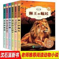 沈石溪动物小说全集6册狮王的崛起三四五六七年级中小学生课外阅读书籍3-6年级必读课外书8-9-10-12-15儿童文学