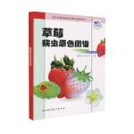 草莓病虫原色图谱――无公害蔬菜病虫鉴别与治理丛书