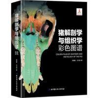 猪解剖学与组织学彩色图谱 9787530487532 陈耀星 王子旭 北京科学技术出版社