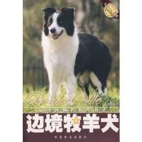 【新书店正版】边境牧羊犬文俸勇著中国林业出版社9787503841644