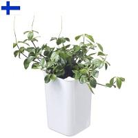 【当当海外购】芬兰进口Orthex 红点设计奖自动吸水储水厨房蔬菜自种盆/家居/办公室花盆-18x18x28cm