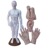 上海经络通人体模型穴位模型四件套/针灸按摩模型 男模
